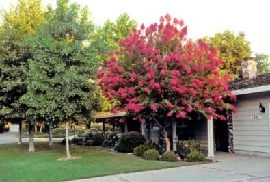 Best Trees For Your Yard Homesteading And Livestock Yards