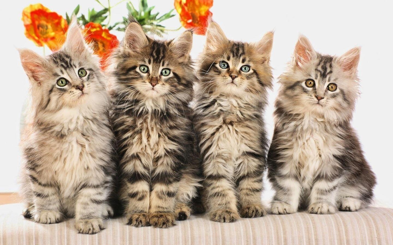 Pin by Ewa Dąbrowska on koty kocury kocięta