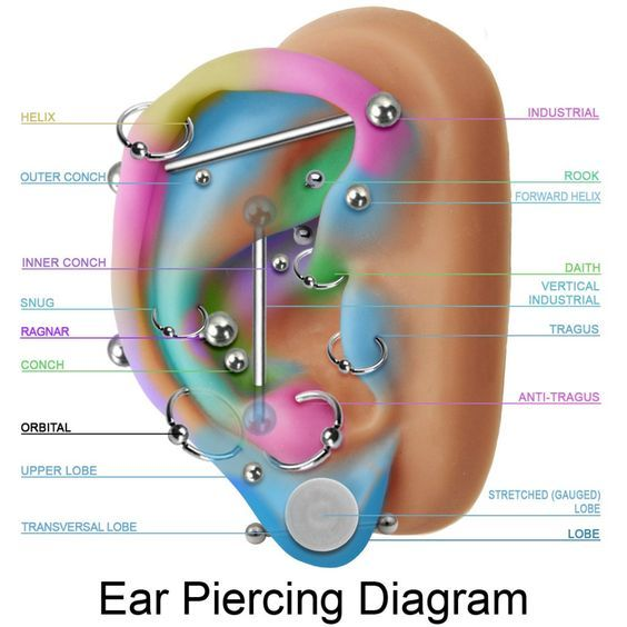 Ear piercing ideas industrial also  guide to the different types of piercings multiple earrings rh pinterest