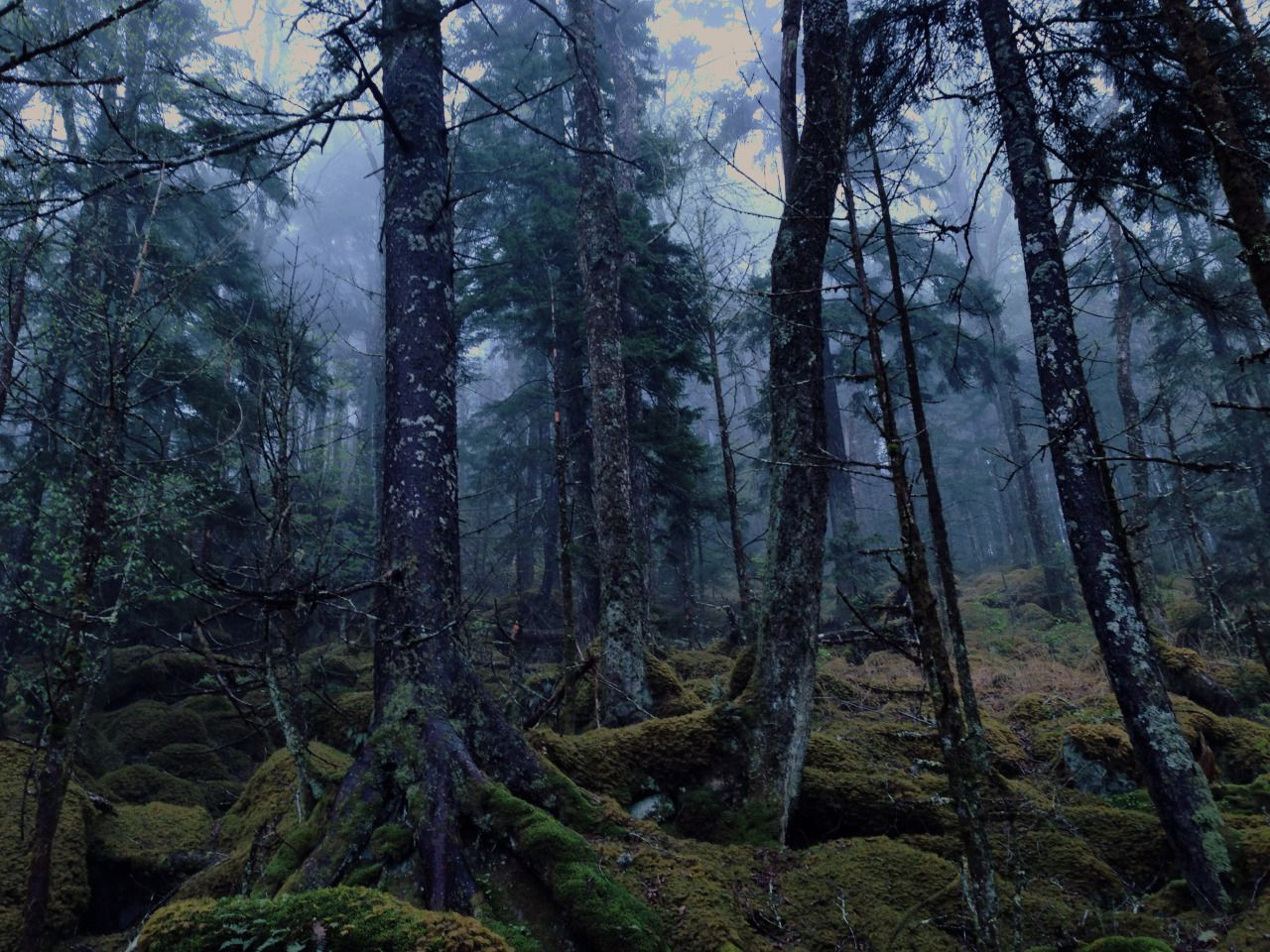 Regnum Satyri Haunted Forest Foggy Forest Beautiful Nature Dawn forest deer trees fog nature