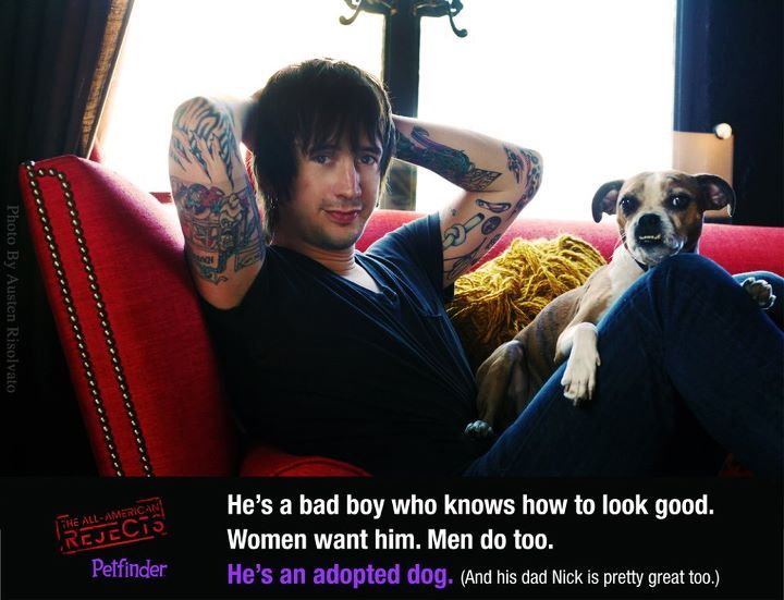 Pin by pam hill on dogs i want all american rejects