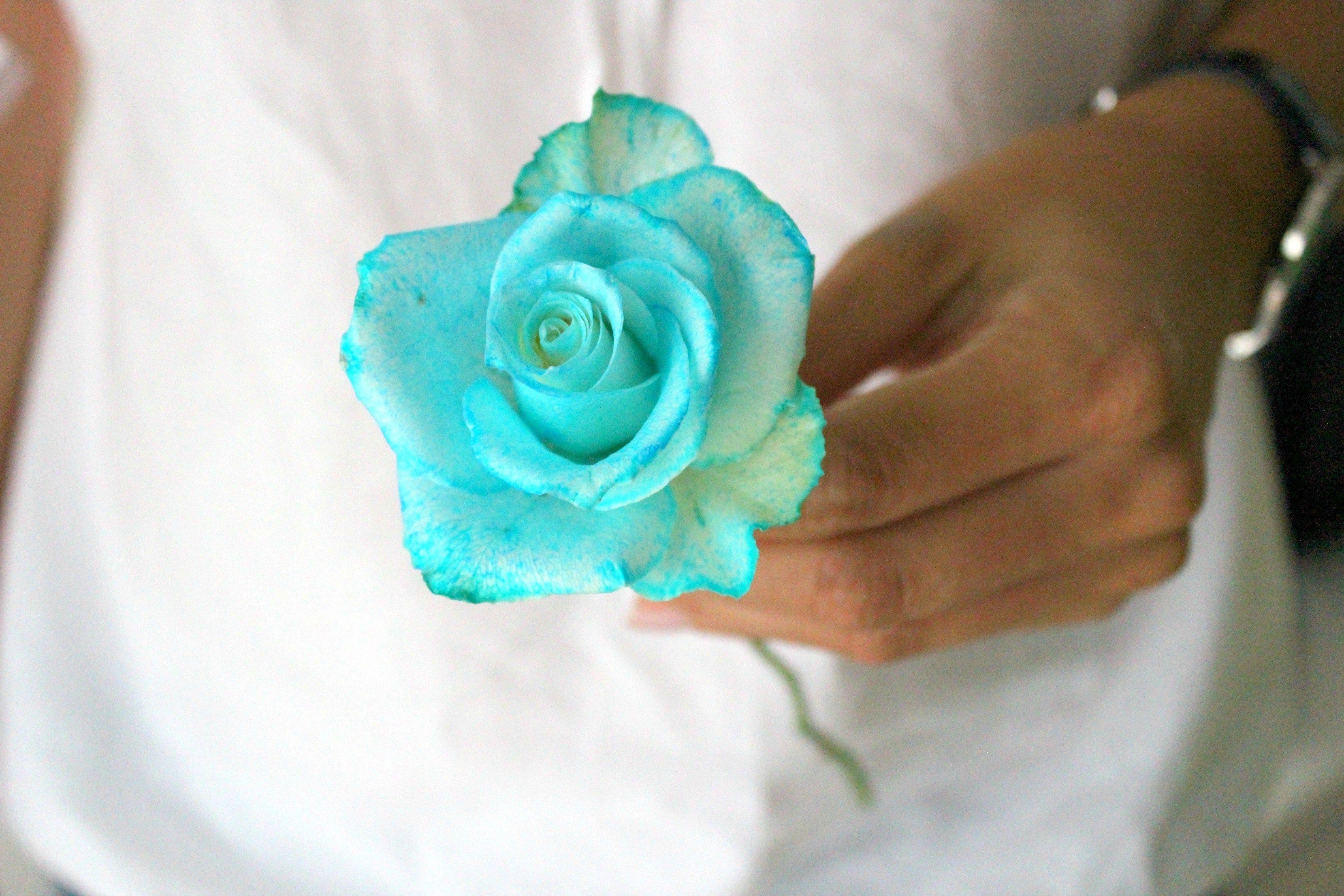 Rosen Blau Faerben