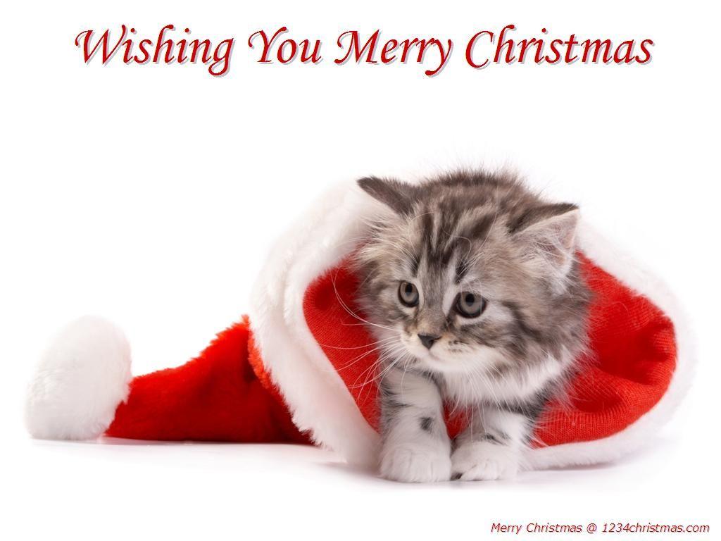 Christmas Kitten Wallpaper Download Katten Honden