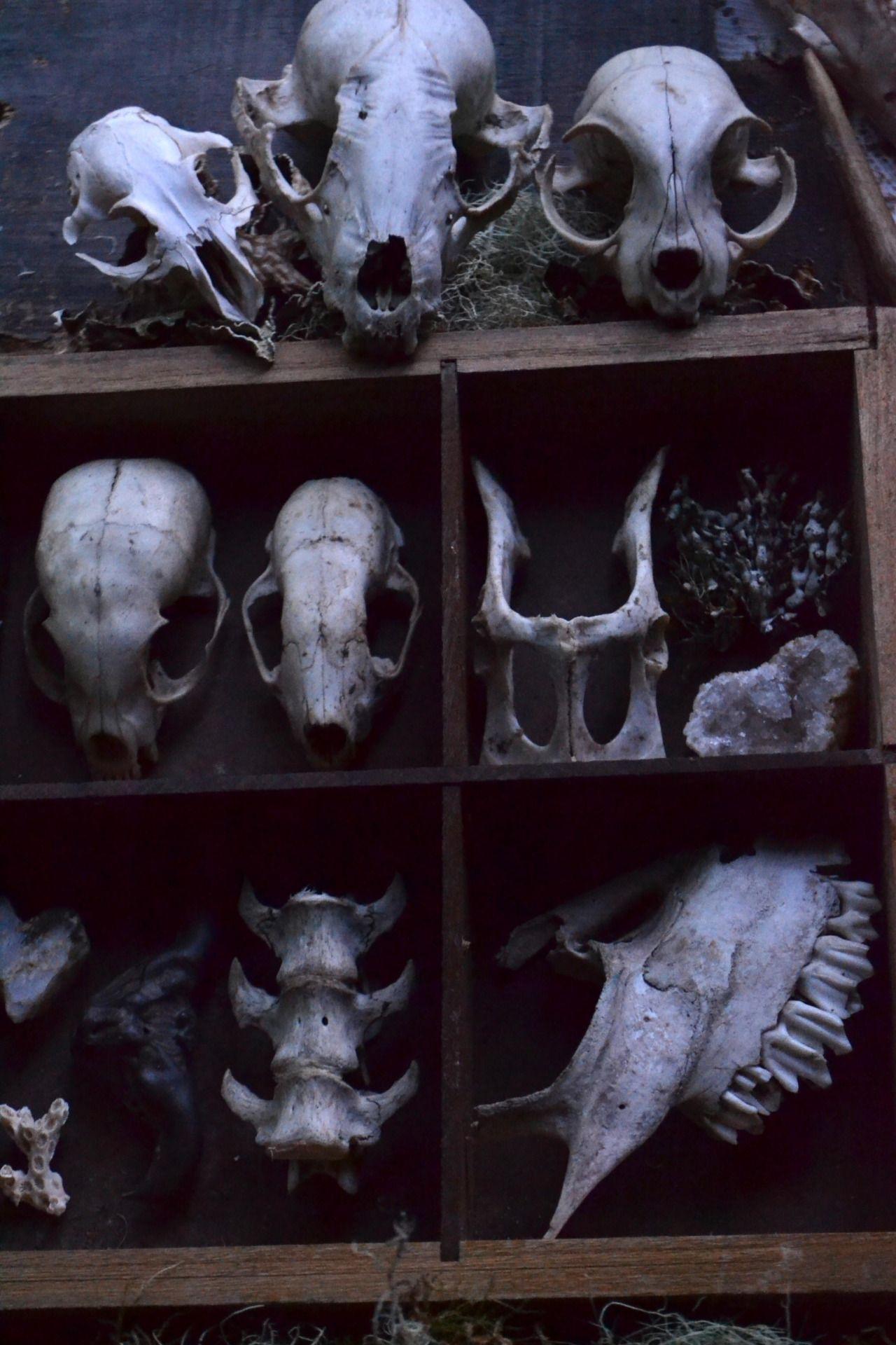 Pinterest: @MagicAndCats ☾ Collection de crânes