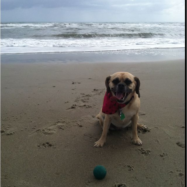 Take your pup to the beach and throw the ball in the waves, she'll have a blast!