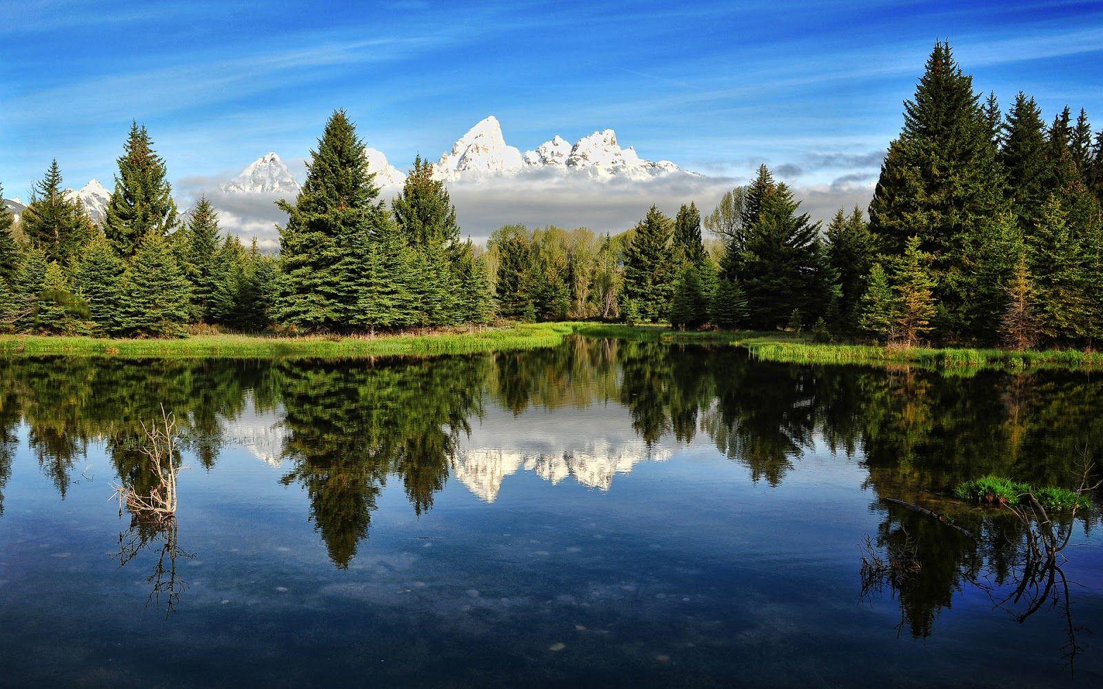 Paisajes bosques hd naturalez hermosa paisajes monta as for Natural landscape