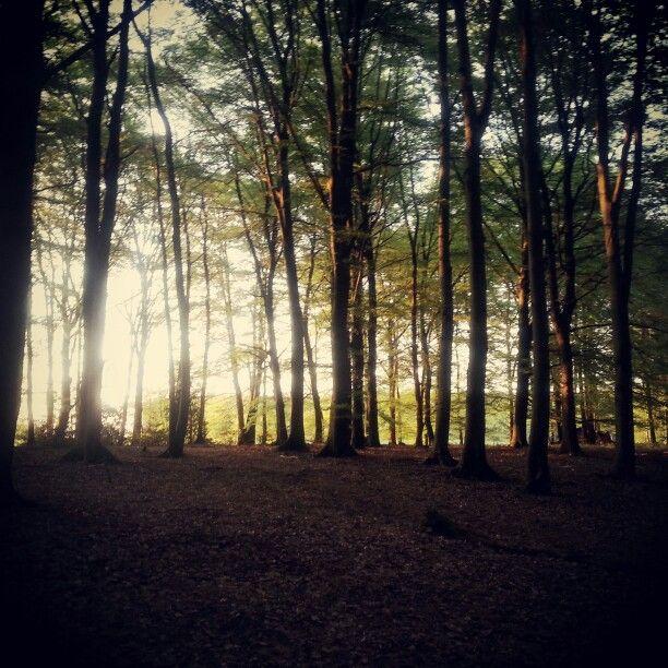 Wald, Sonnenuntergang