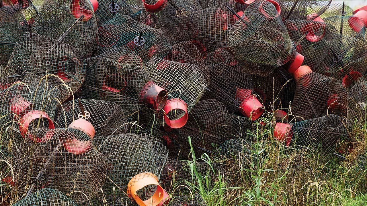 Wire-mesh crawfish traps.