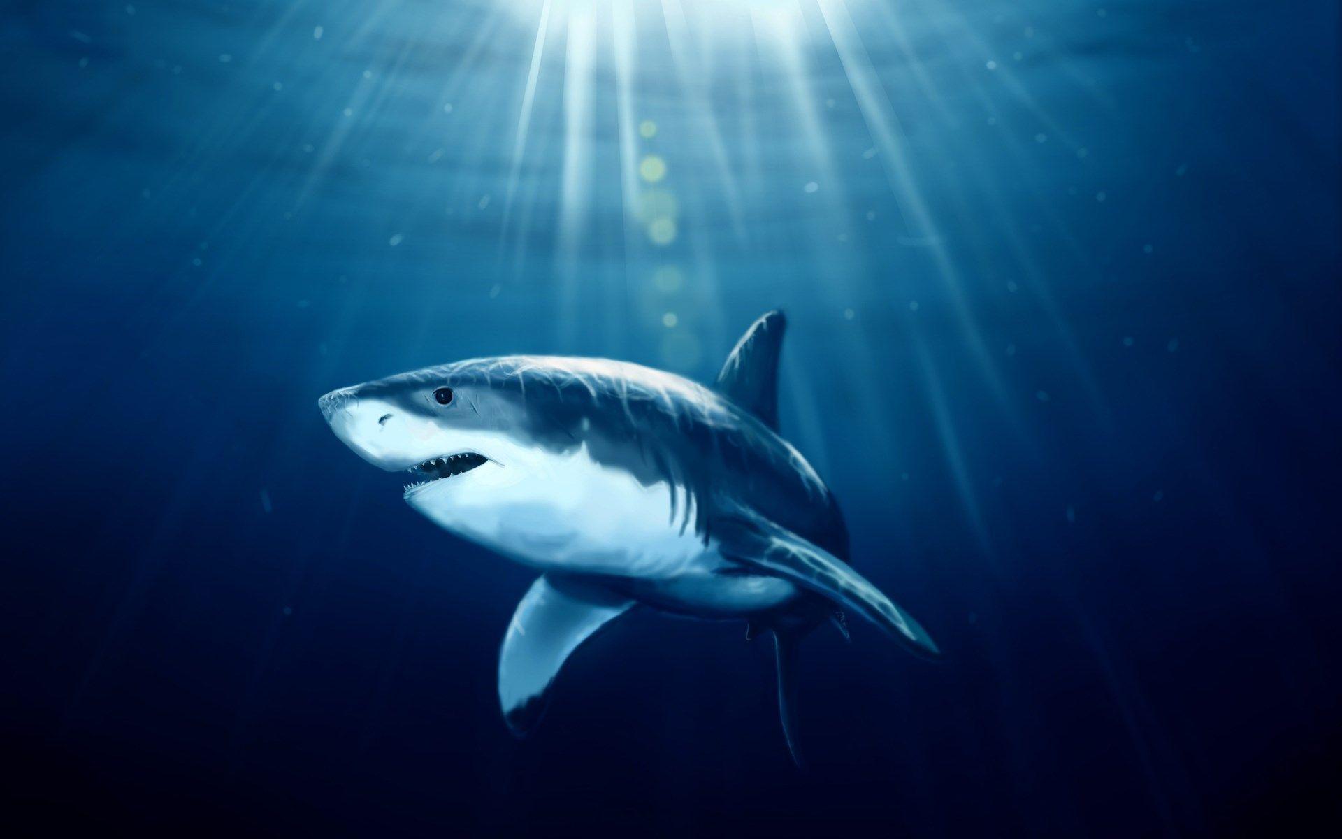 beautiful sharks wallpapers o oshenka Pinterest
