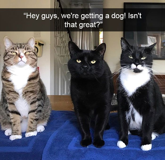 Cat Snapchat Funny Cat Pictures Funny Dogs Funny Pictures