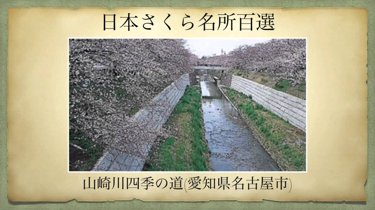 【日本さくら名所百選】山崎川四季の道(愛知県名古屋市)[Beautiful cherry blossoms in Japan]