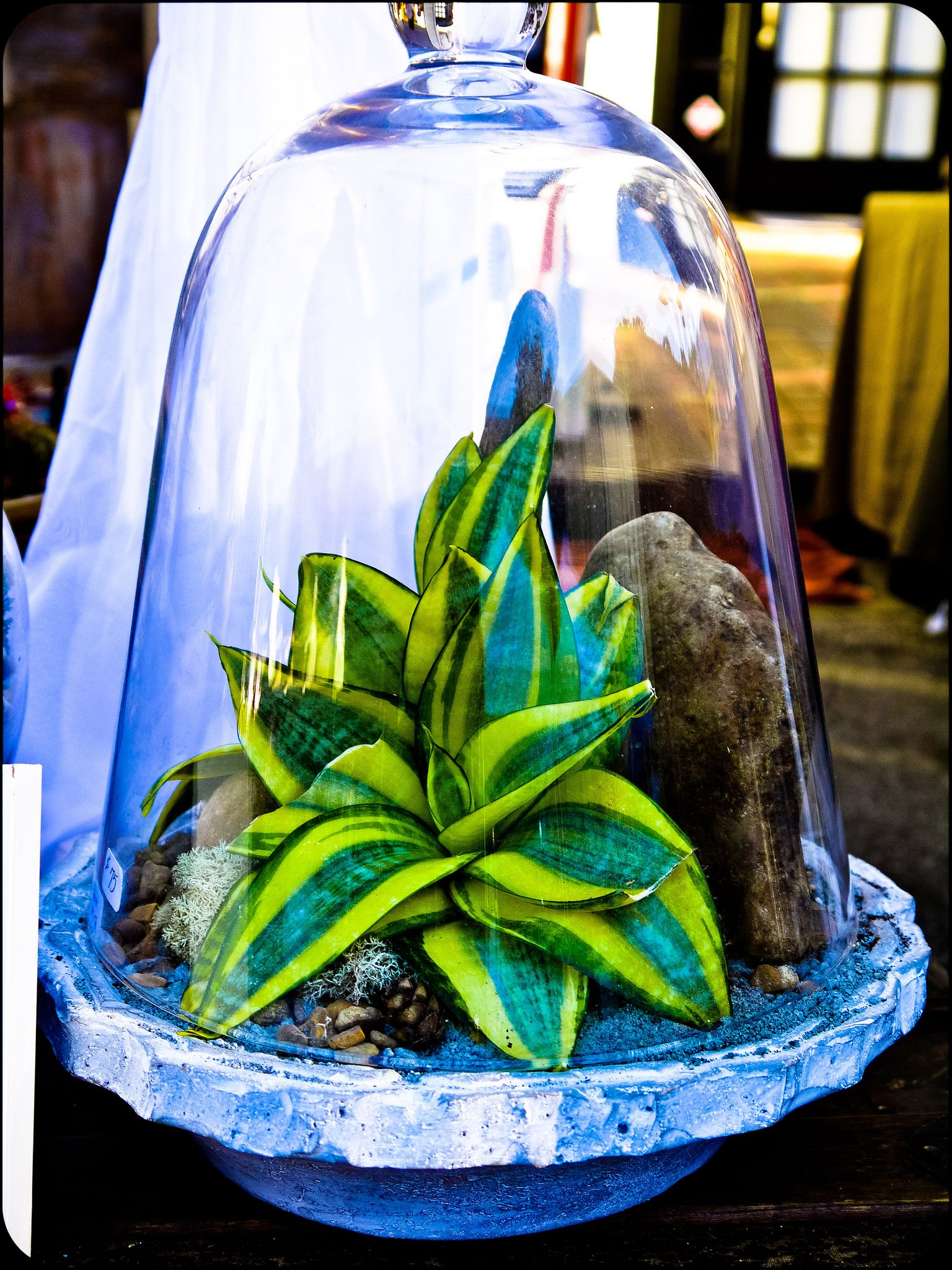 Terrariums by Bloom Designs