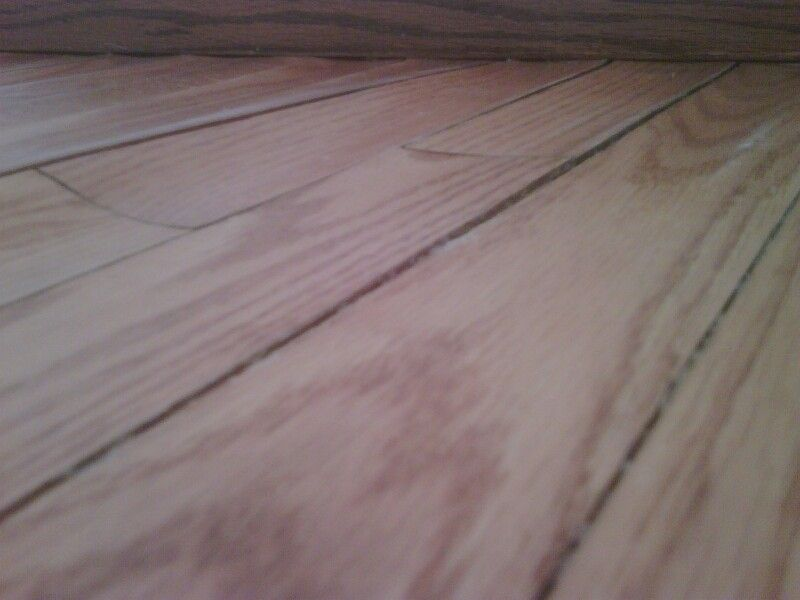 Severe Cupping Due To Water Infiltration Hardwood Floor Disasters