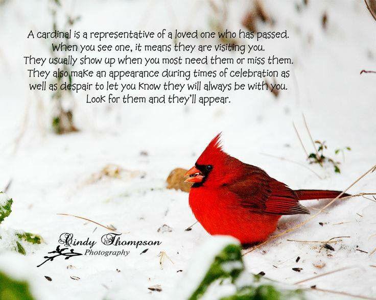 The Cardinal Memory Poems Pinterest Cardinals Grief And Bird