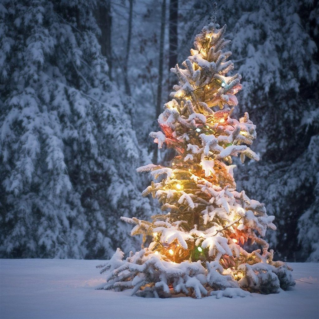 neon light on snowy christmas tree #ipad #wallpaper   ipad