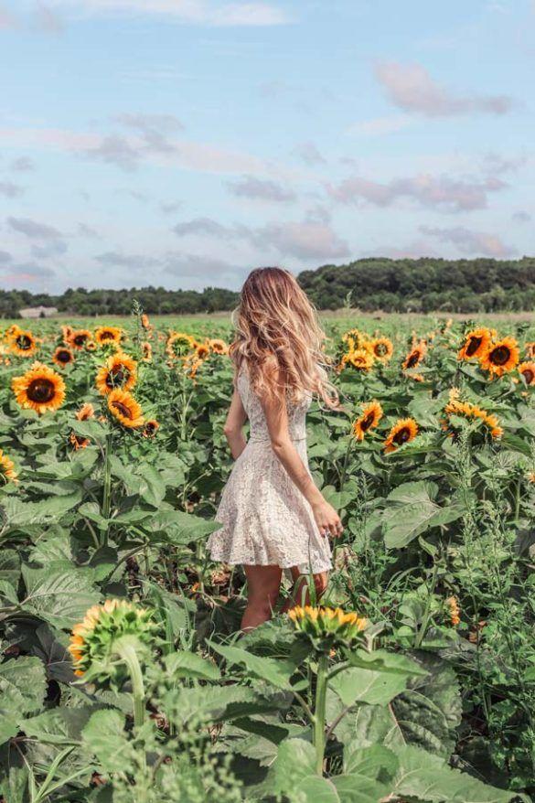 Beautiful Sunflower Fields In Long Island, NY