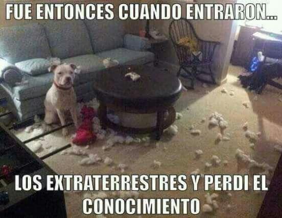 Humor Es Funny Dogs Funny Animals Cute Animals
