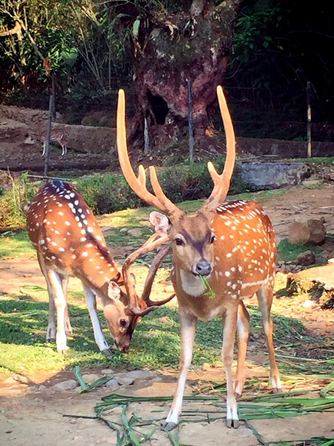Kebun Binatang Ancol