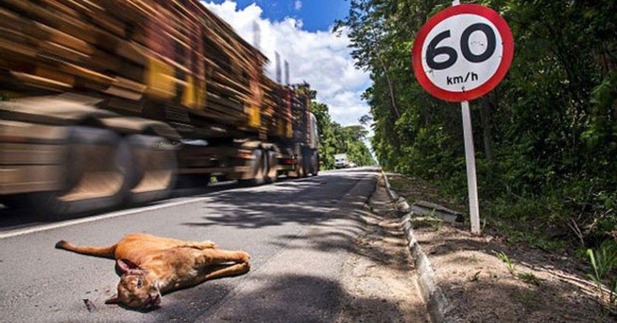 Por que o Brasil massacra 1 milhão de animais por dia em