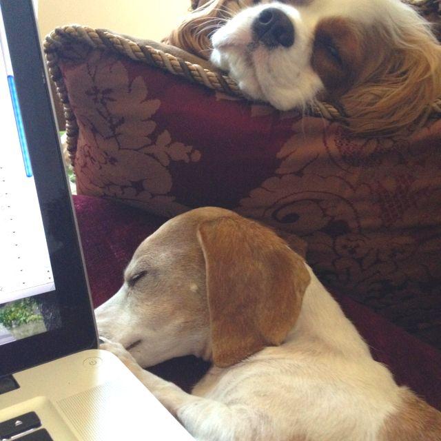 My babies helping me work.