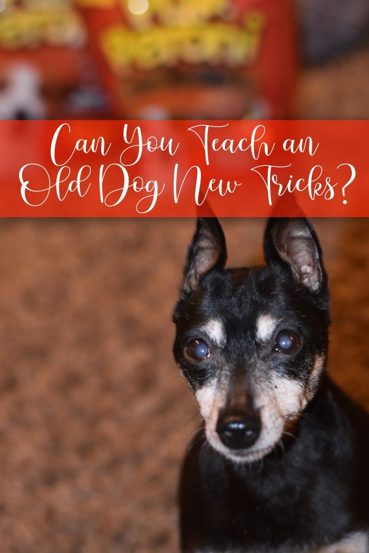 Can you teach an old dog new tricks old dogs dogs dog