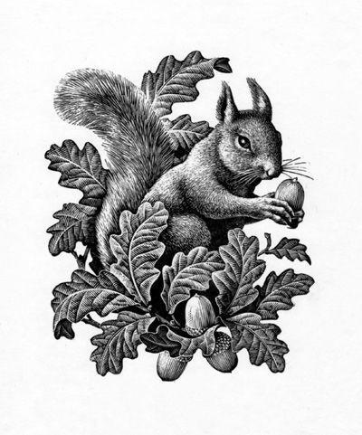 Image Result For Squirrel Illustration Public Domain