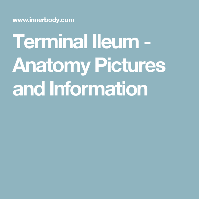 Terminal Ileum - Anatomy Pictures and Information | FYI:Ulcerative ...