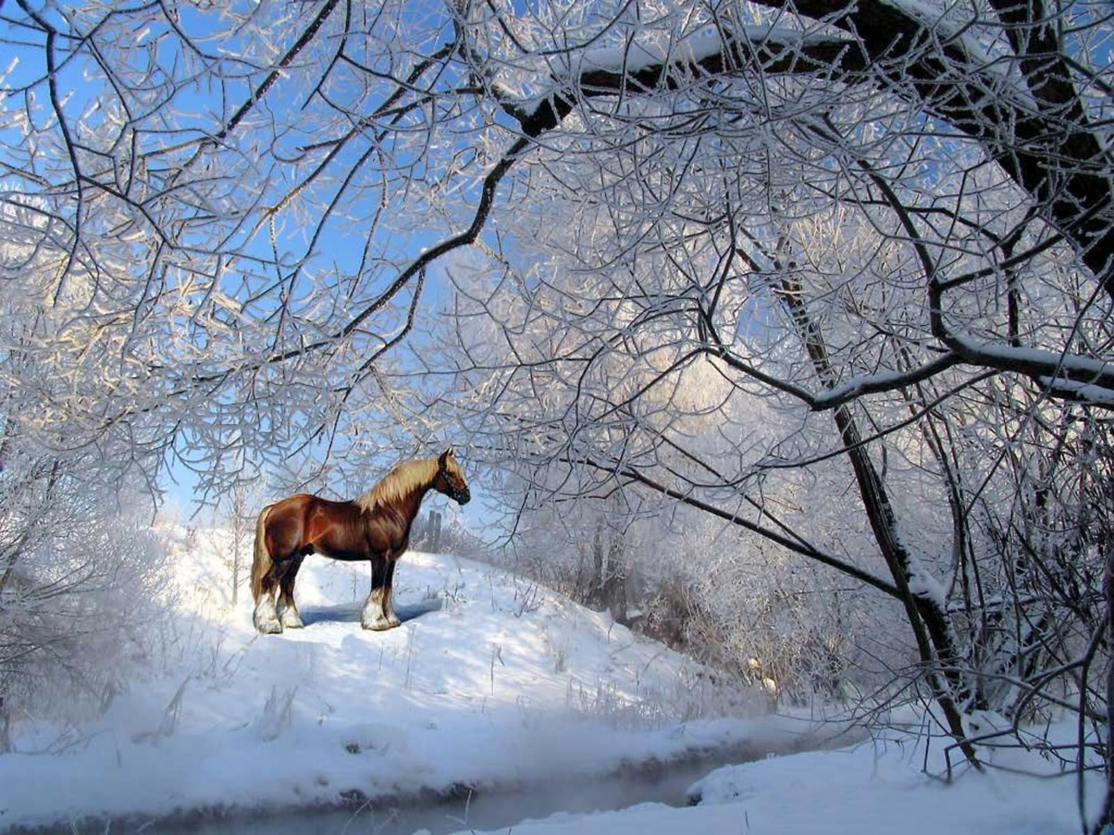 Top Wallpaper Horse Winter - 94646351bd997c856ba3a394f168219a  Graphic_394274.jpg