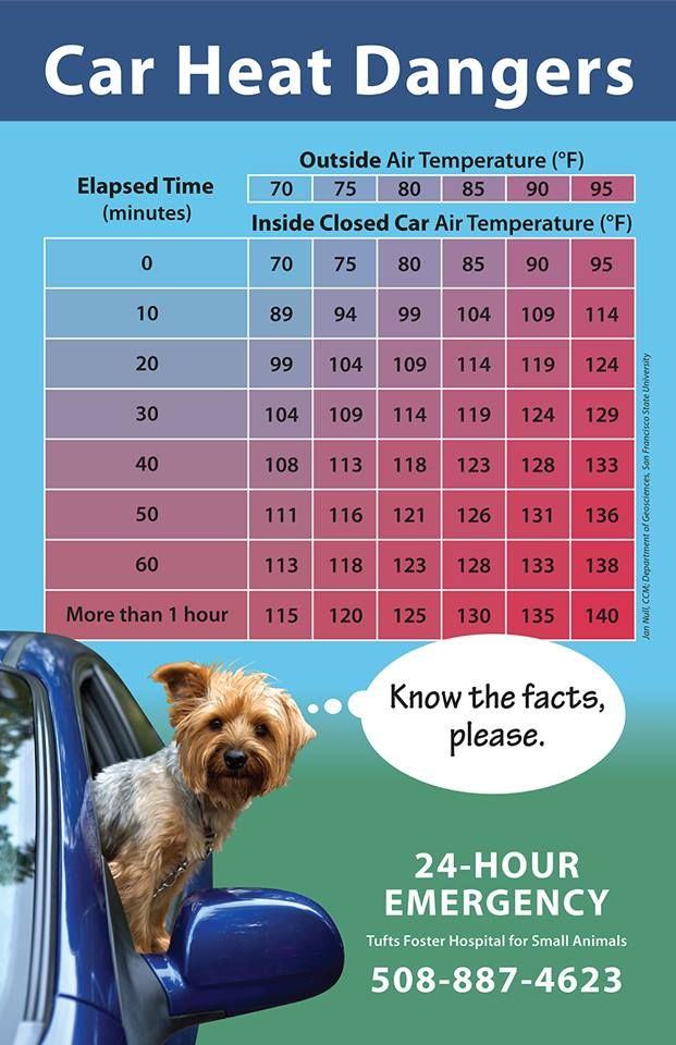 Please Do Not Leave Pets Or Kids In Cars Summer Safety Tips