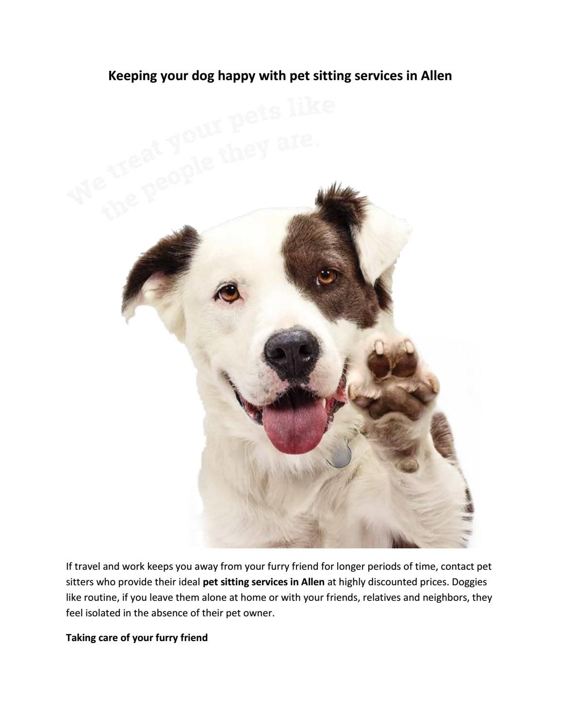 Pet Sitting Services in Allen Keep Your Dog Happy (With