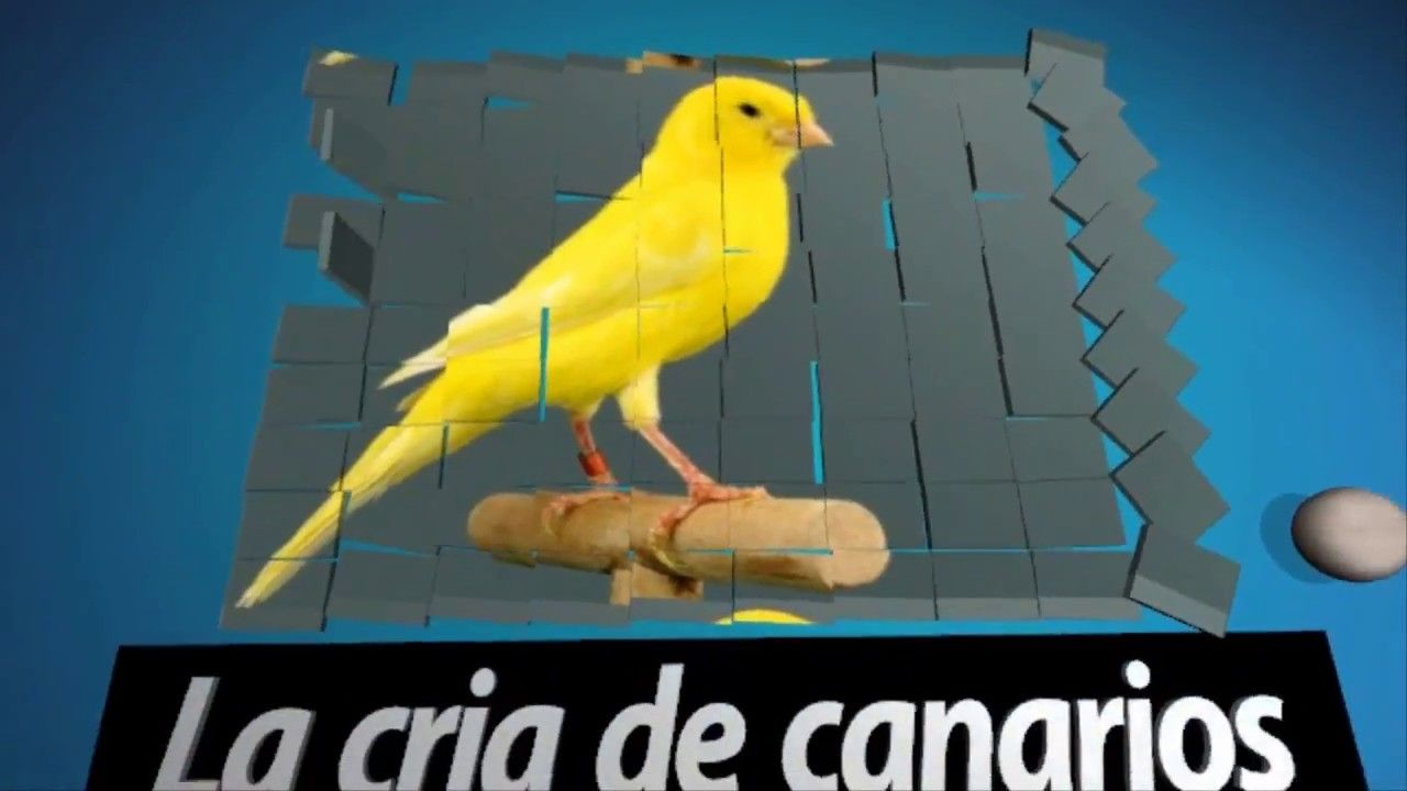 La Cría De Canarios Remedio Natural Para Parásitos Intestinales De Los Canarios Aves Picaduras De Mosquitos