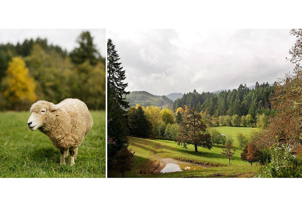 oregon-sheep-farm-lamb #summerlambventures