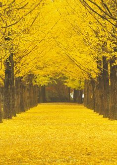 Nami Island, the small half-moon-shaped island in Chuncheon, a must-visit tourist destination in South Korea (source)