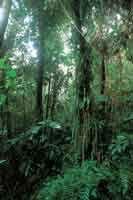 Debido a la humedad atmosférica, la enmarañada vegetación de la selva andina presenta abundancia de plantas epífitas y un estrato herbáceo d...