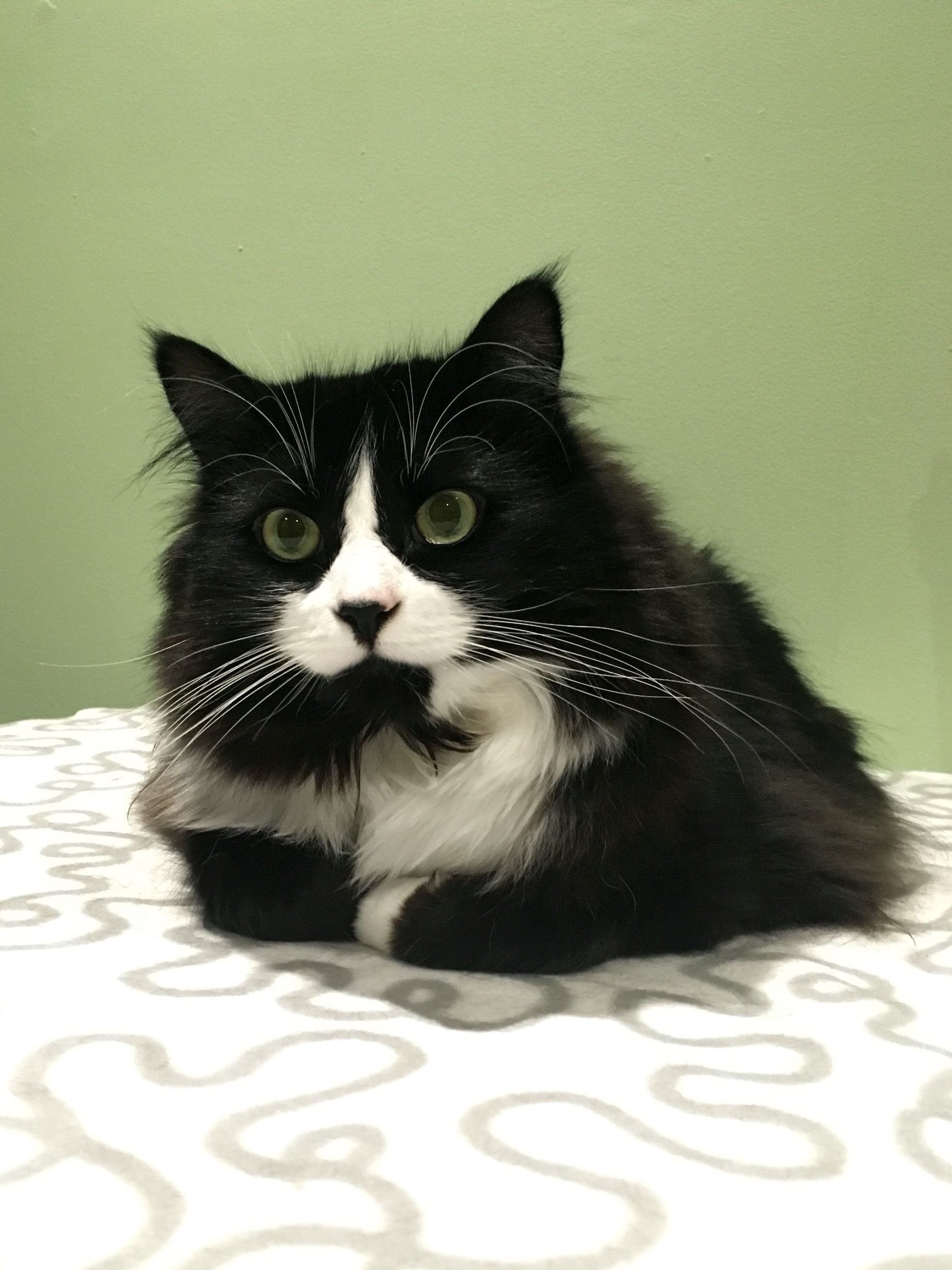 My Vet Tells Me That Most Tuxedo Cats Have Pink Noses But Coco