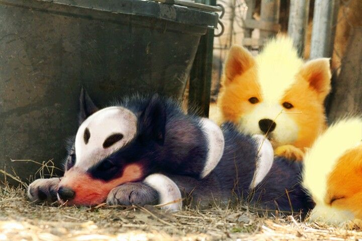 Realistic Poochyena Growlithe and Houndour...