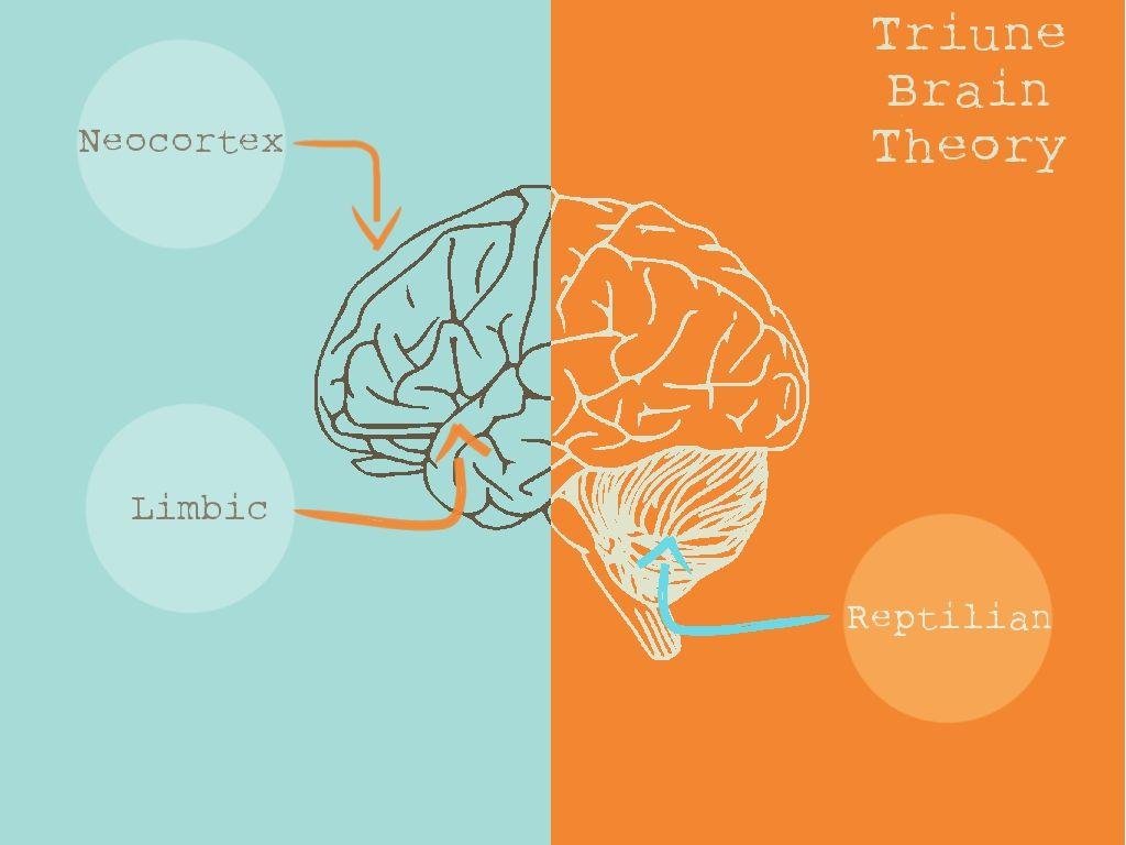 Triune Brain Theory Your Triune Is Primitive Don T Let