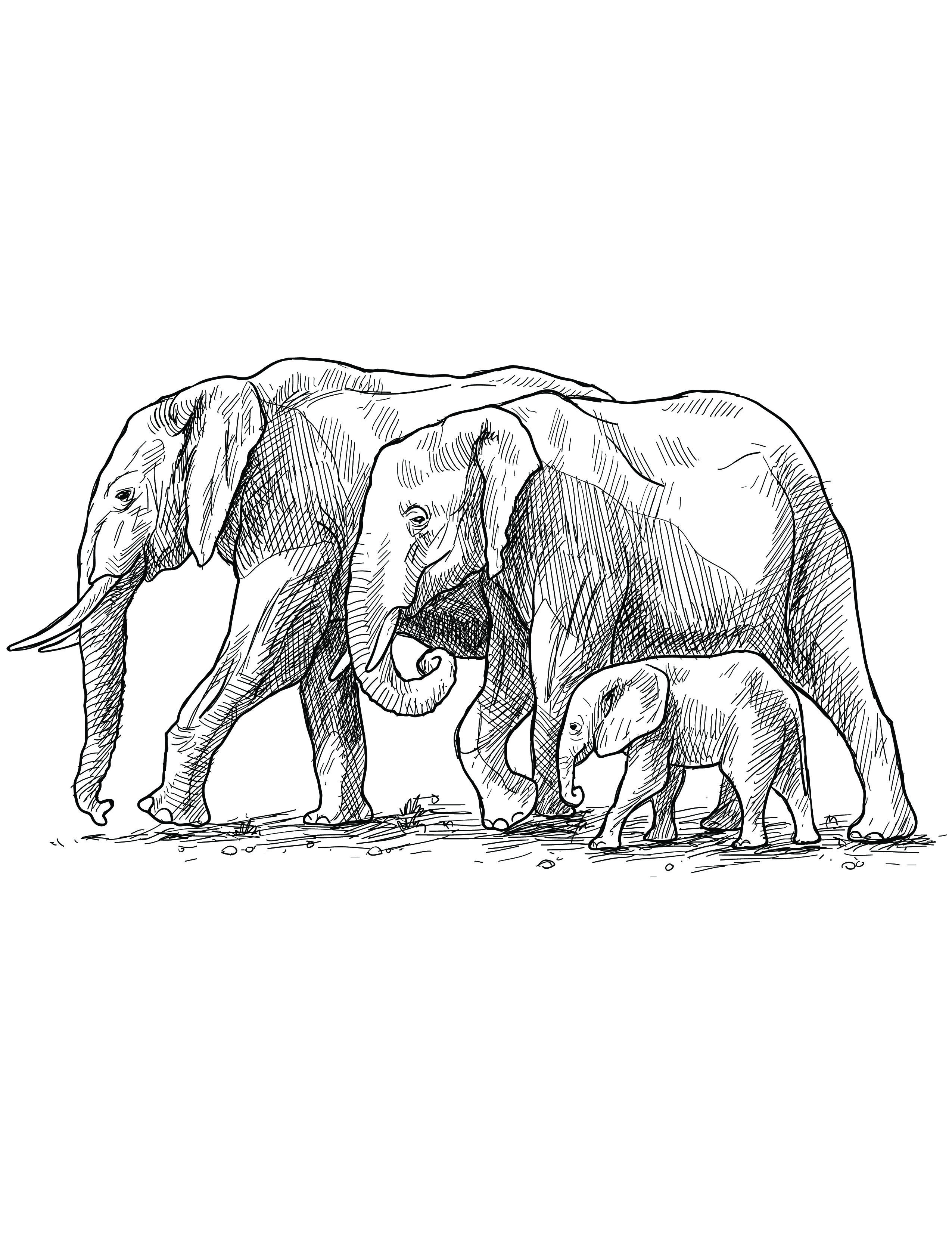 Coloriage Famille Elephant.Coloriage Grayscale Gratuit Famille Elephant Elephants Adult