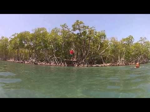 Tarzan en Cayo Barco Guayama,P.R. - http://www.nopasc.org/tarzan-en-cayo-barco-guayamap-r/
