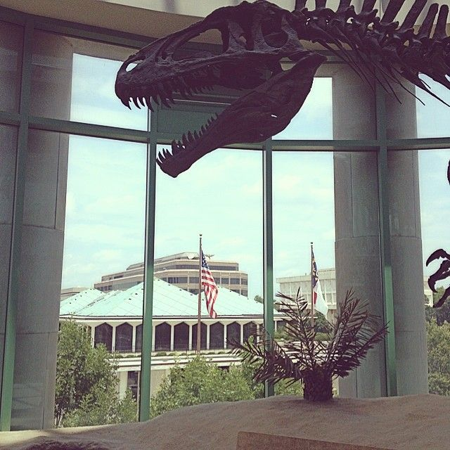 North Carolina Museum of Natural Sciences in Raleigh, NC // dinosaur bones! and a blue whale skelly that was unfathomably large.