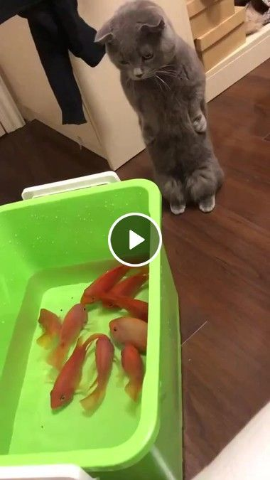 Animated Gif Please Sir Can I Have One Fish For Lunch Cute Baby Animals Cute Animals Funny Animal Videos