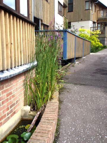 SuDS in very tight urban situation : Raised rill channel to pool.  Springhill…