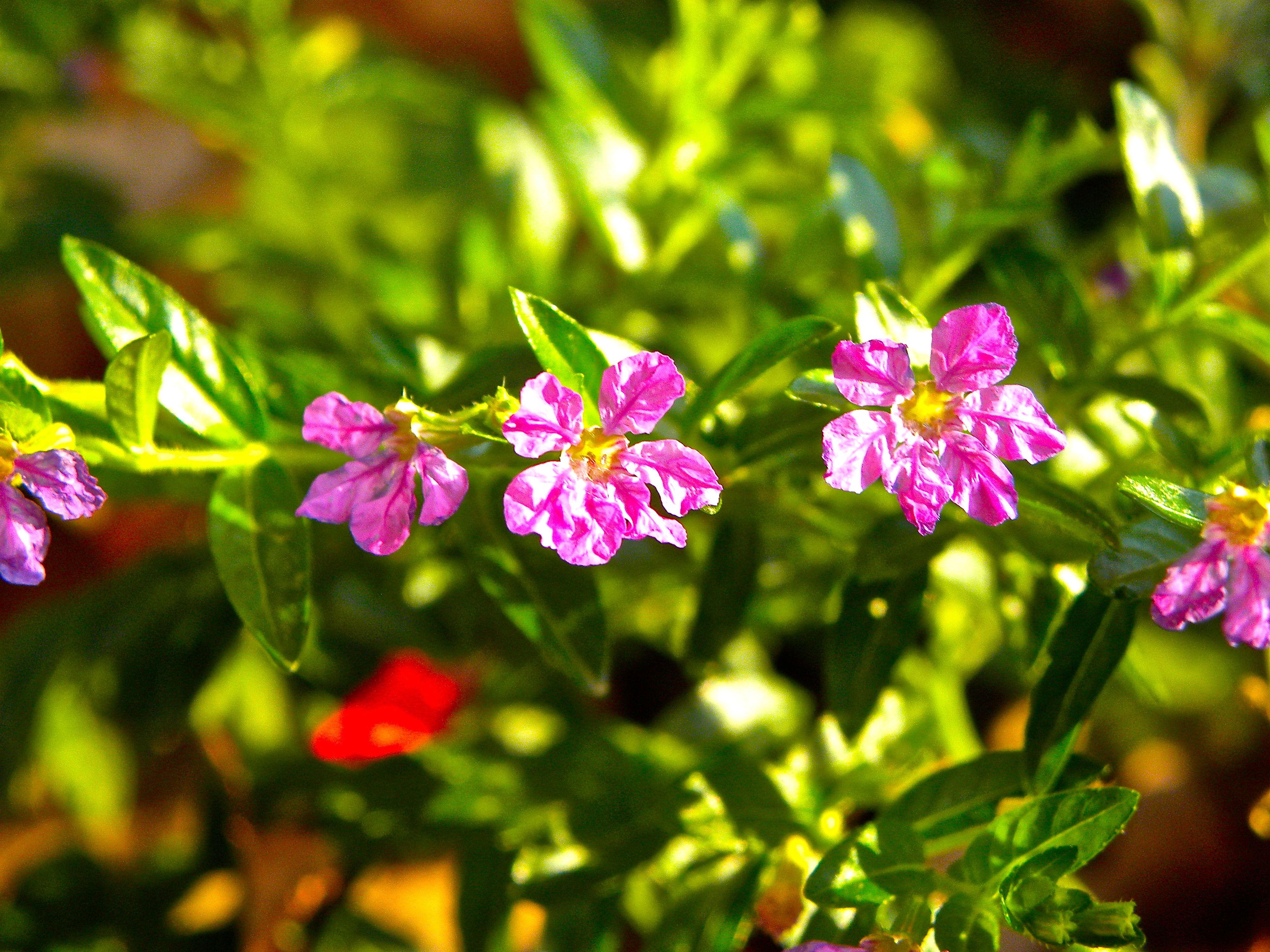 Bloom of the Week Wednesday: October 7, 2012