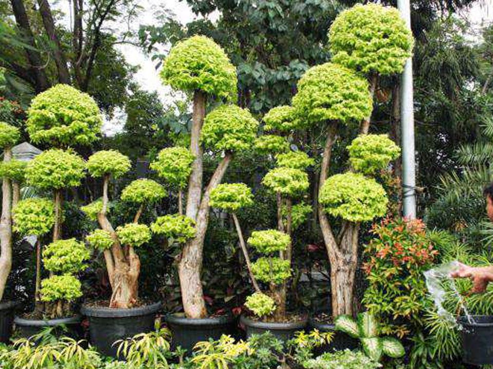 Bonsai Bonsai Plants Bonsai Pohon Dan Tanaman
