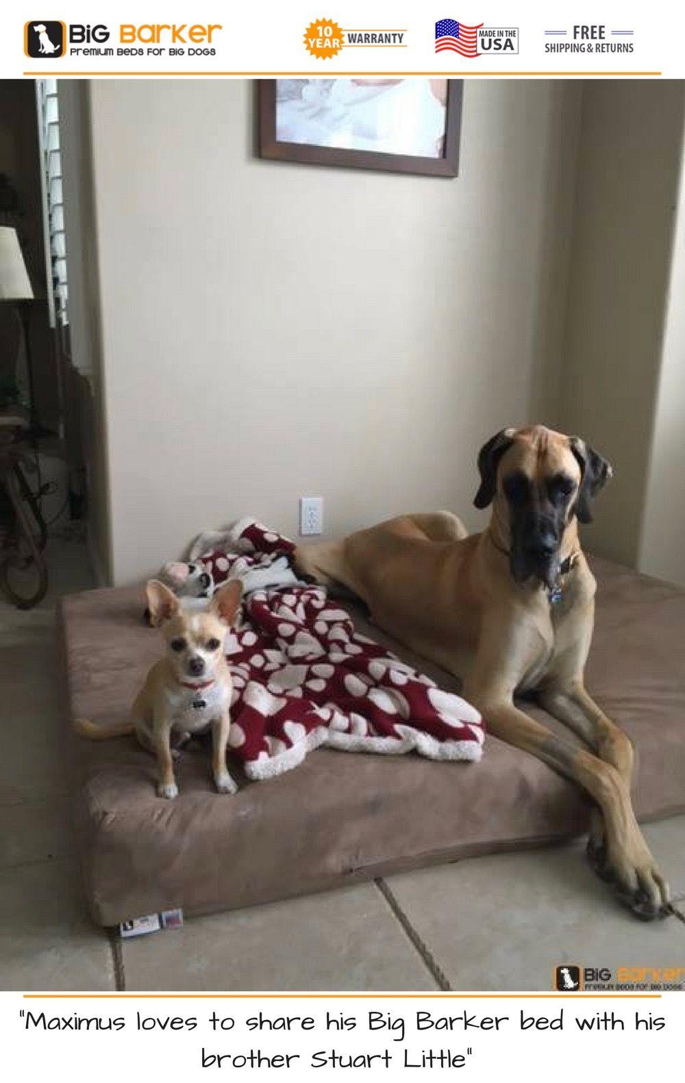 Orthopedic Dog Beds for Large & Extra Large Dogs Large