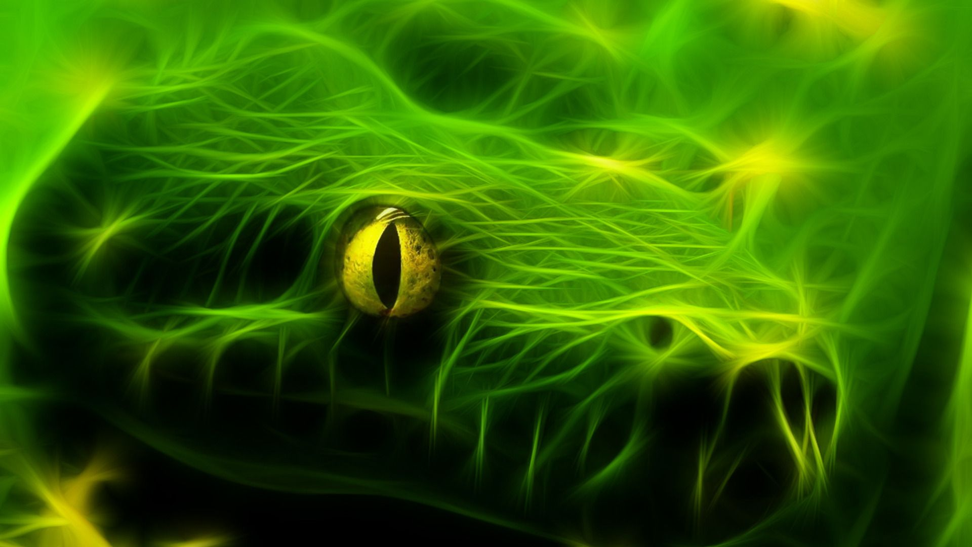 exotic snake wallpapers exotic snake images for free mtx | hd