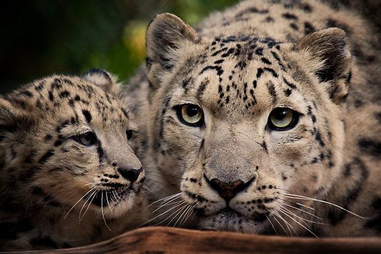 Natalie Manuel › 