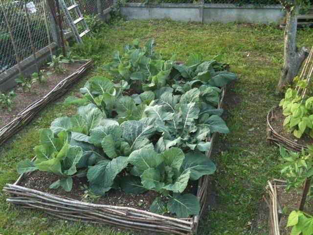 Carrés de jardin avec barrière en noisetier tressés | Horticulture ...