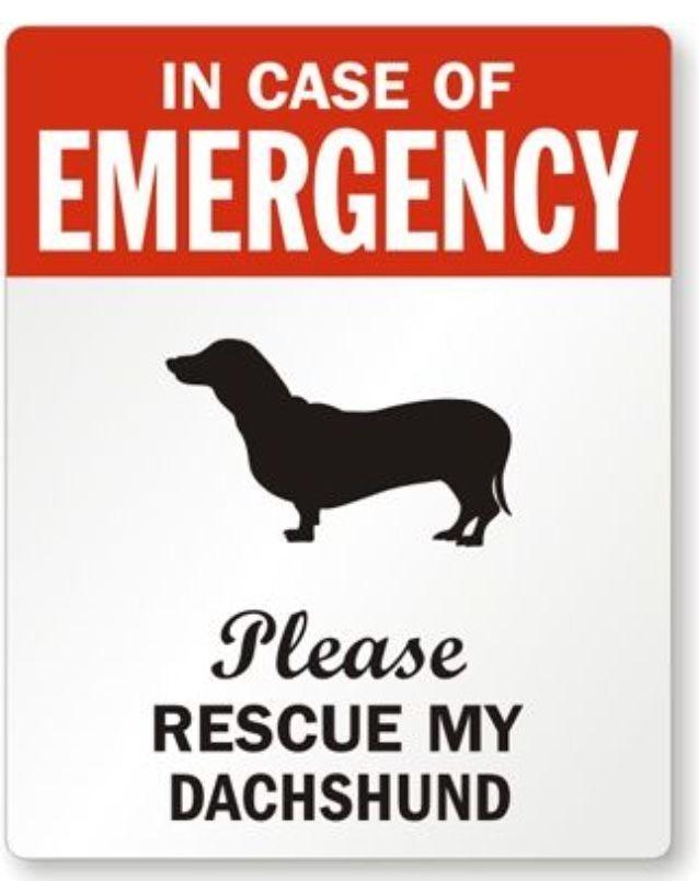 In case of emergency. . .   Dachshund Love   Pinterest   Salchichas ...