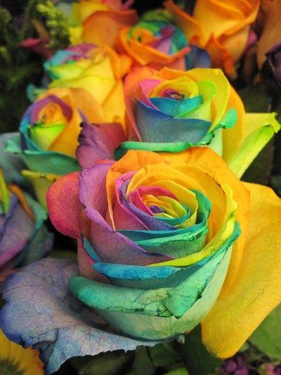 Roses in Sweden